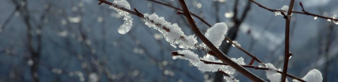 a winter scene of ice on a branch