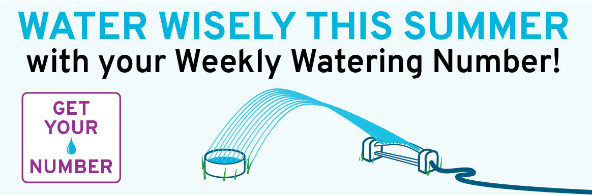 Water wisely this summer with your Weekly Watering Number!